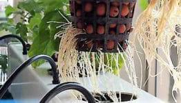 coltivazione idroponica per tutti