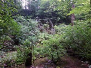 bosco del parco nazionale di plitvice